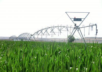 "Pivot 5"" de tres tramos en cultivo de maiz"